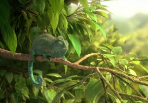 our-wonderful-nature-the-common-chameleon4